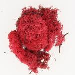 Mousse naturelle Lichen Rouge 50 g