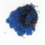 Mousse naturelle Lichen Bleu 50 g