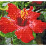 Broderie Diamant kit Squares intermédiaire Fleur d'hibiscus